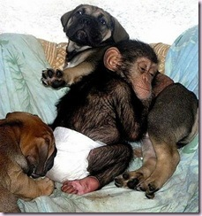 chimpdog3