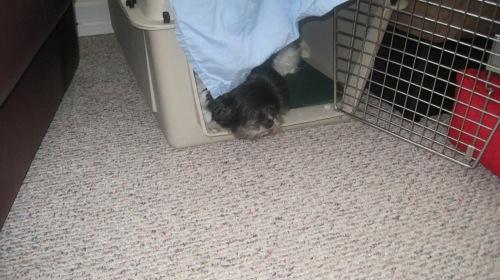 Weasel Wars part 5