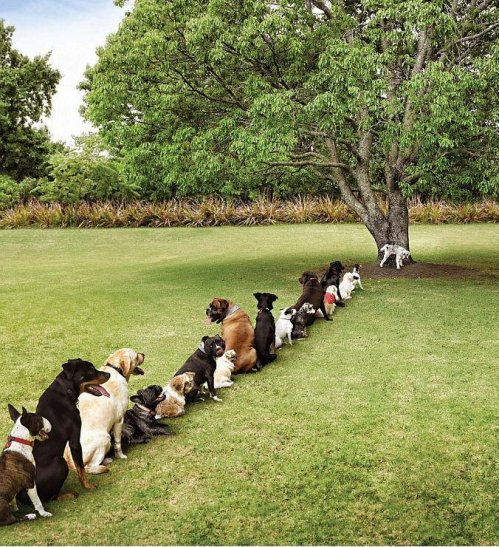 We've really got to STOP cutting down trees